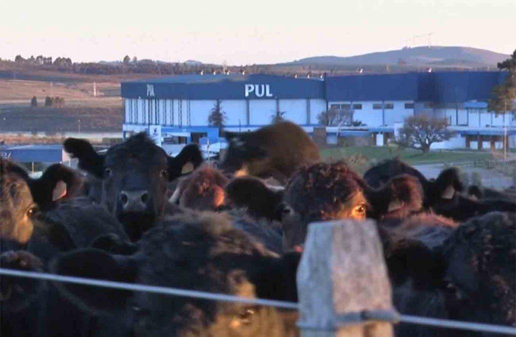 Aislan 120 trabajadores del frigorífico PUL de Cerro Largo por Covid-19 o cuarentena