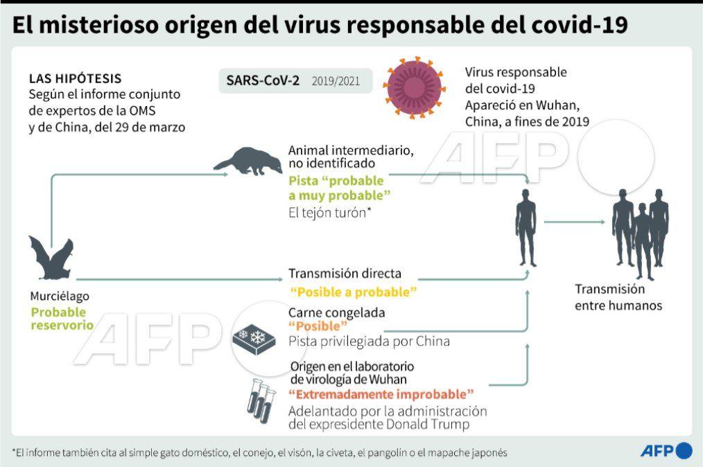 OMS considera que el Covid-19 se transmitió de un murciélago al hombre vía otro animal
