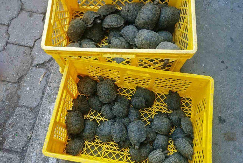 Descubren una valija con 185 crías de tortugas gigantes en el aeropuerto de Galápagos