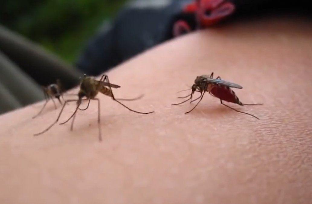 Intendencia no fumigará por mosquitos: será fenómeno de corta duración