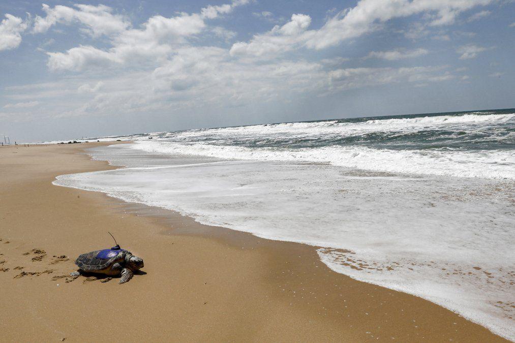 Una tortuga boba equipada con un rastreador GPS es devuelta al mar Mediterráneo en la playa de Nitzanim