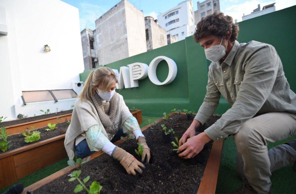 El IMPO instaló una huerta en el corazón de Montevideo