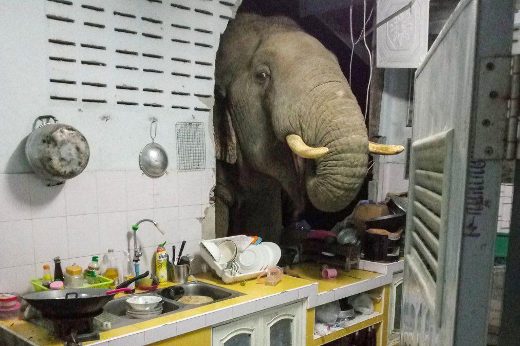 Un elefante buscando comida en una cocina en Pa La-U