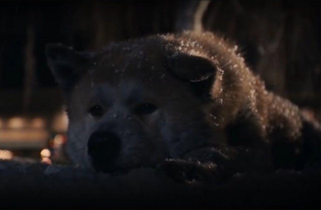 Los perros en el cine: emotivo homenaje a los que se han ganado un lugar en el corazón del público