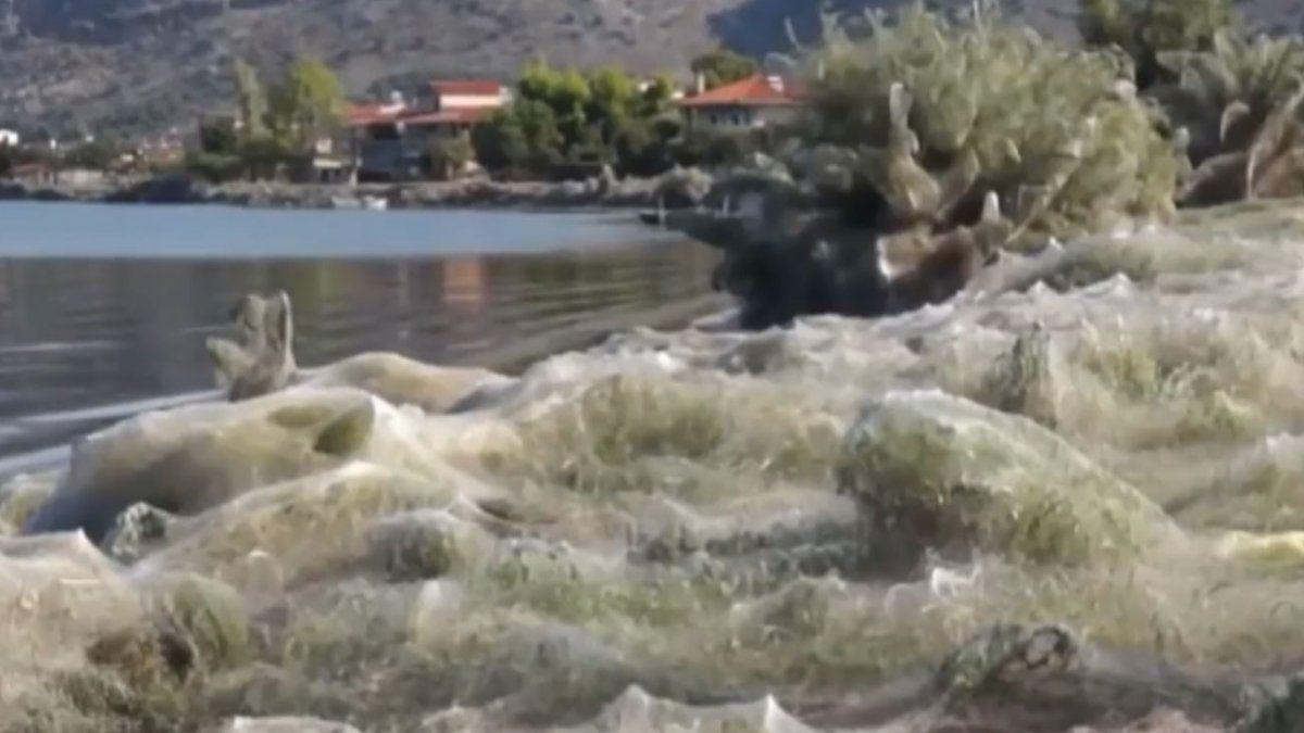 Una telaraña gigante de 300 metros sorprendió a los vecinos de un pueblo costero