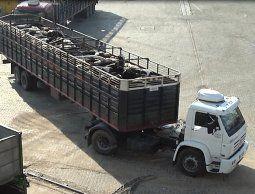 Ministerio investiga maltrato a ganado uruguayo y no descarta tomar medidas