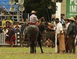 12 jinetes lesionados y dos caballos fallecieron en una nueva edición de la Criolla del Prado