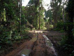 Noruega bloquea ayuda para la Amazonía por deforestación en Brasil