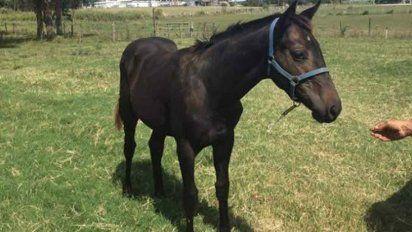 Continúa mejorando la calidad de los caballos uruguayos - Subrayado.com.uy