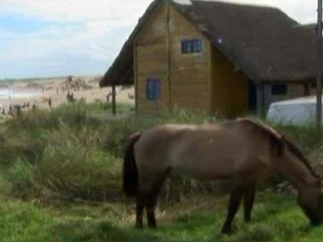 Demolerán casas privadas en tierras estatales de Punta del Diablo