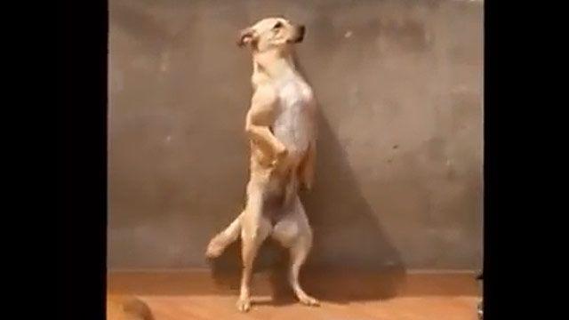 Un perro bailarín es la nueva estrella de las redes sociales