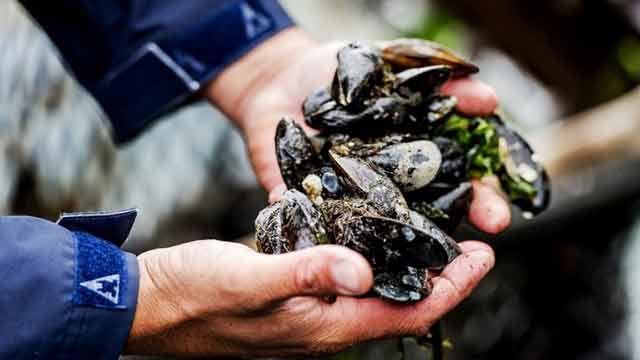 Dinara mantiene veda para extraer y vender moluscos bivalvos por marea roja