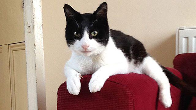 Un gato batió el Récord Guinness al ronroneo más alto