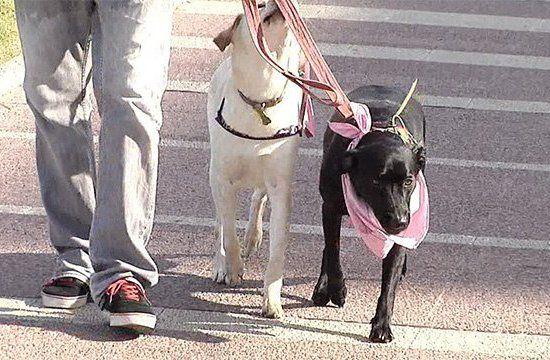 Multa por no recoger excrementos de perro en Montevideo será de $ 5.000