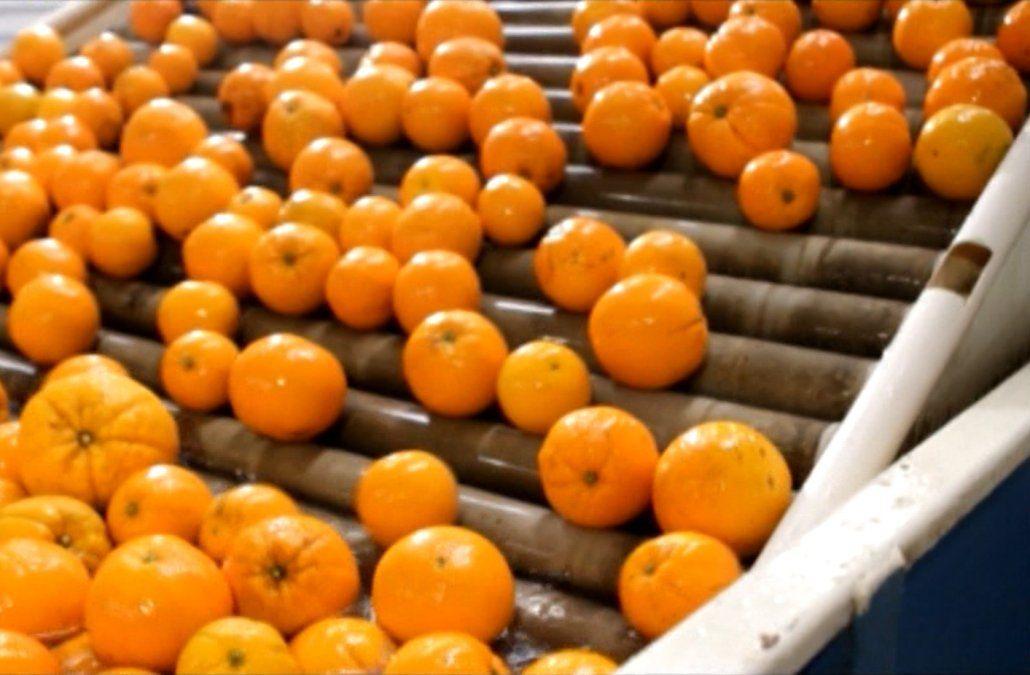 Naranjas uruguayas rechazadas en Italia por tener plaguicida no afectan la salud, según el MGAP