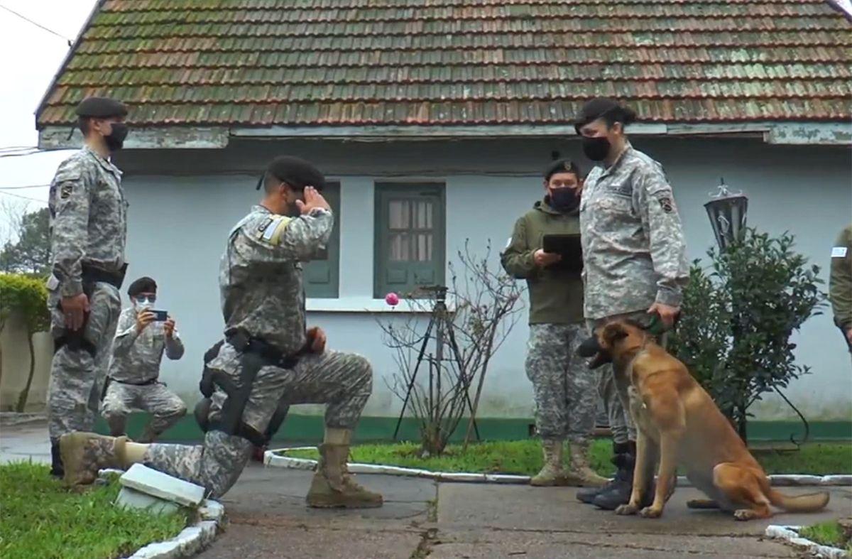 Cuatro perros de la Policía fueron jubilados tras varios años de servicio