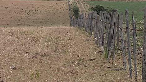 Gobierno anunciará medidas por emergencia agropecuaria en el Este