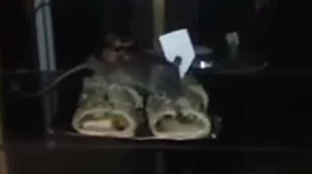 Confitería porteña escrachada por un video de ratas comiendo en la vidriera