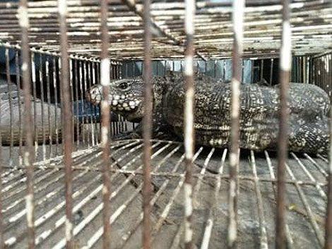Incautaron 300 animales en ferias de Tristán Narvaja y Larravide
