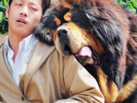 Venden perro en China por 2 millones de dólares