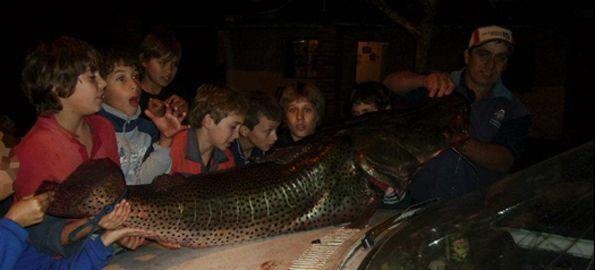 Surubí de 62.5 kilos pescado en Salto y repartido entre vecinos
