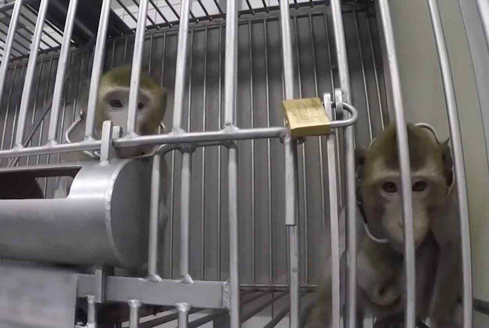 Video muestra maltrato animal en un laboratorio químico farmacéutico en Alemania