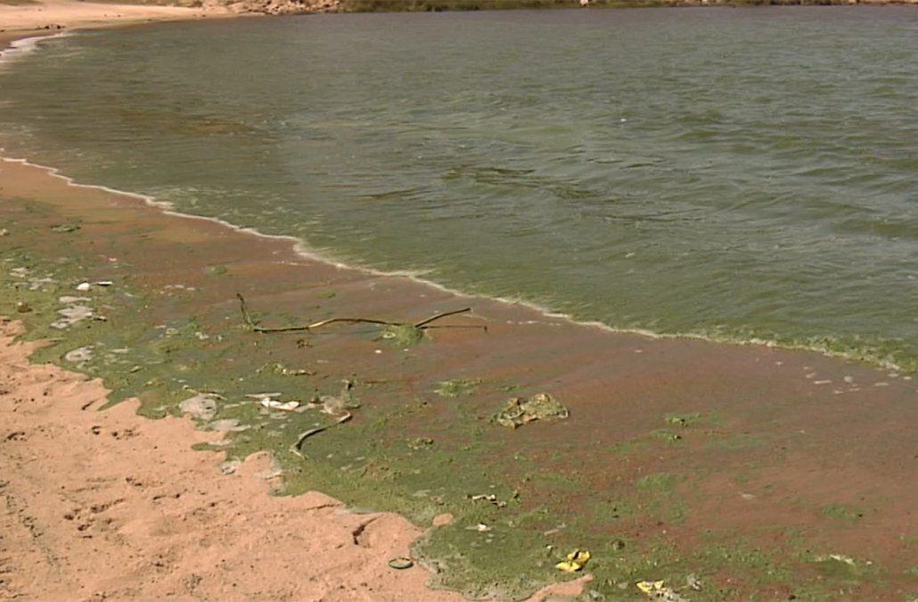 ¿Qué hacer en caso de contacto con cianobacterias en la playa?