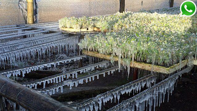 Alerta por frío polar y viento: temperaturas bajo cero el fin de semana