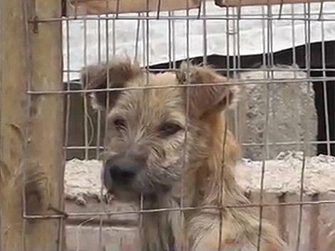 Refugios de Maldonado albergan a 1.000 perros abandonados