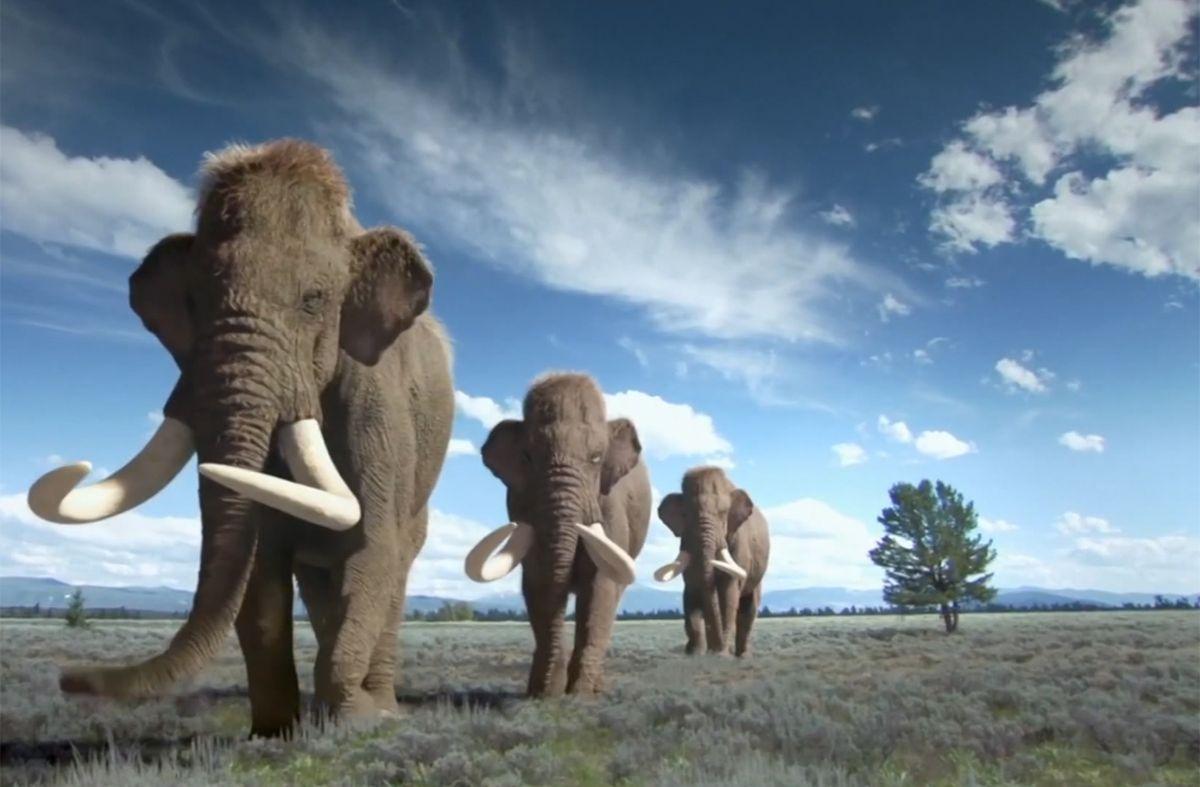 Científicos de EEUU se plantean criar mamuts miles de años después de su extinción