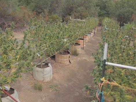 Desde el 10 de abril quedará todo pronto para producir marihuana