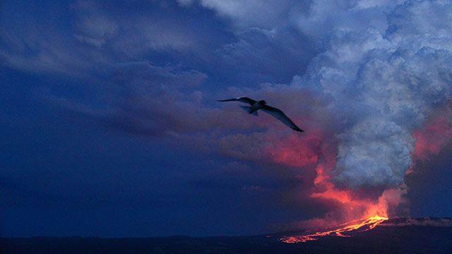 Volcán hace erupción en santuario de iguanas rosadas en islas Galápagos