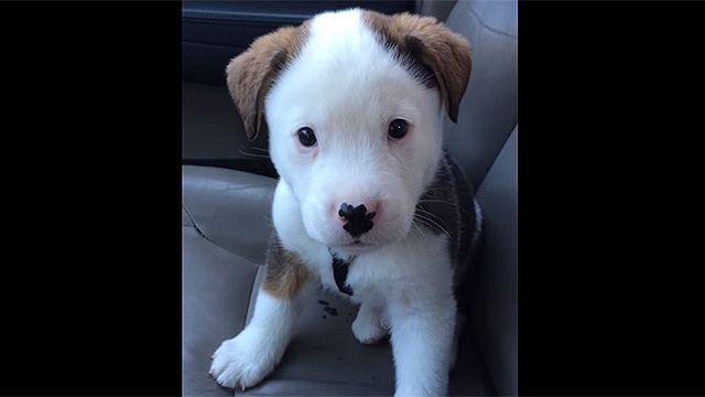 El video de un perrito con hipo causa sensación en Youtube