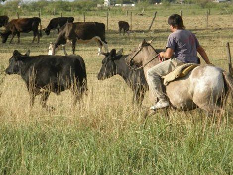 Más de 70.000 trabajadores rurales esperan por convenio salarial