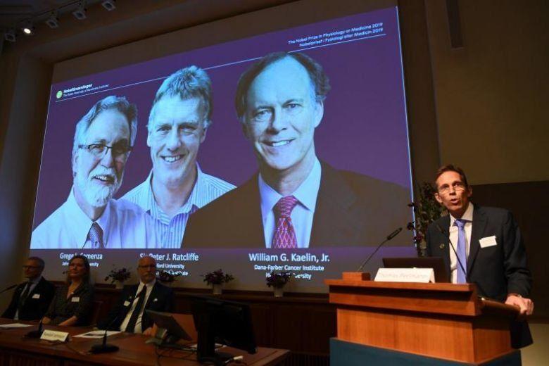 Nobel de Medicina para investigación sobre oxígeno y células en el tratamiento del cáncer y la anemia
