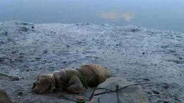 Tres meses de prisión para un español que ató a un perro para ahogarlo