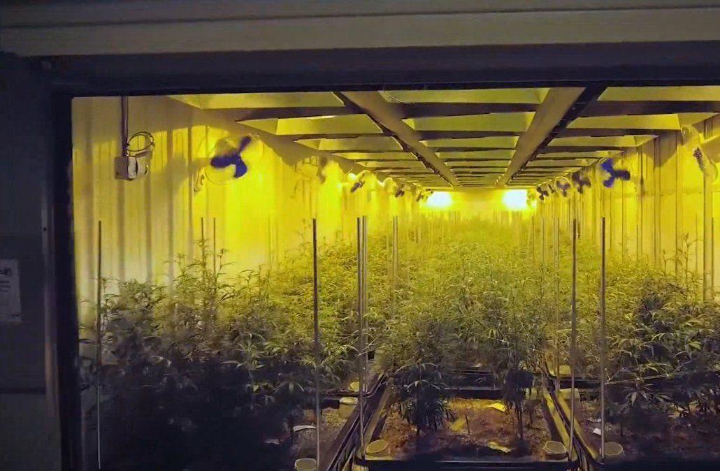 Millonaria inversión en cannabis medicinal de Juan Lacaze fue suspendida por Khiron Life Science